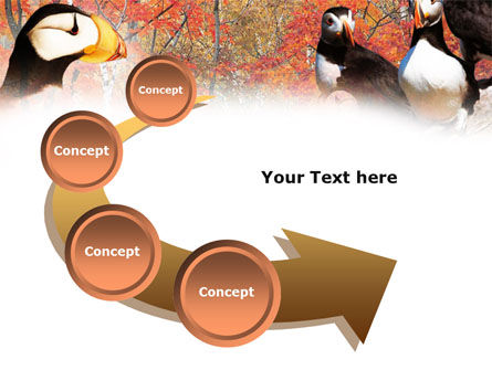 Ornithology PowerPoint Template Slide 6