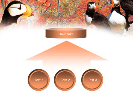 Ornithology PowerPoint Template Slide 8