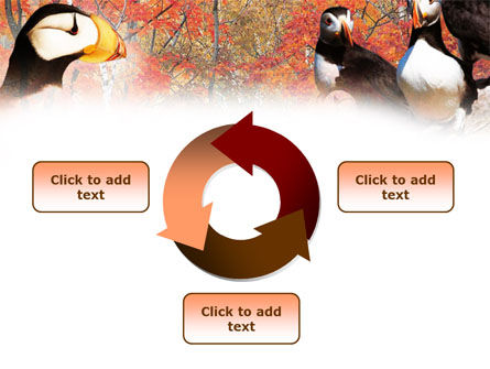 Ornithology PowerPoint Template Slide 9