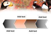 Ornithology PowerPoint Template#16