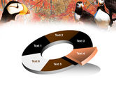 Ornithology PowerPoint Template#19