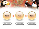 Ornithology PowerPoint Template#5