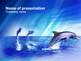 Animals and Pets: Dolphins PowerPoint Template #00958