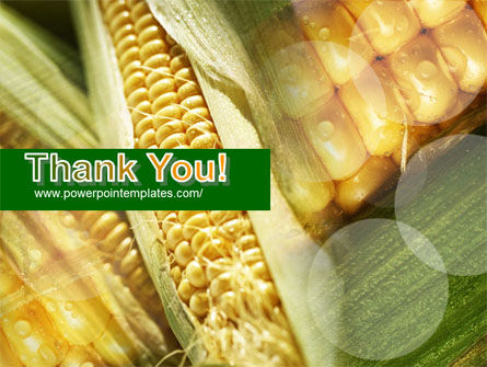 Maize PowerPoint Template Slide 20