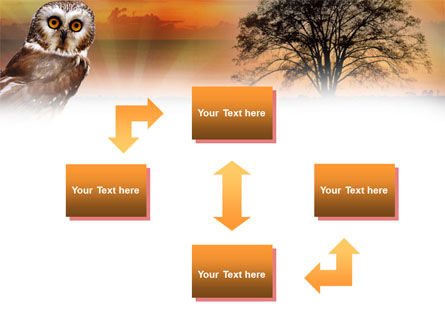 Owl PowerPoint Template, Slide 4, 00998, Animals and Pets — PoweredTemplate.com