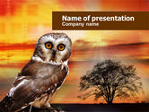 Animals and Pets: Modello PowerPoint - Gufo #00998