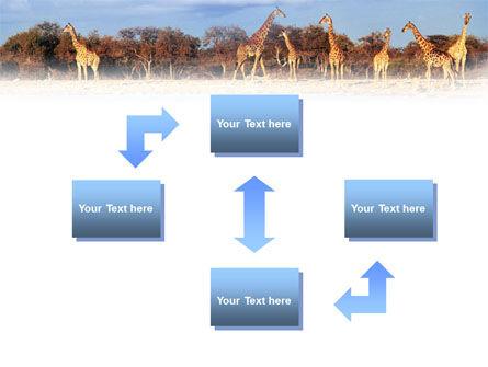 Giraffe PowerPoint Template, Slide 4, 01097, Animals and Pets — PoweredTemplate.com