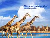 Animals and Pets: Modello PowerPoint - Giraffa #01097
