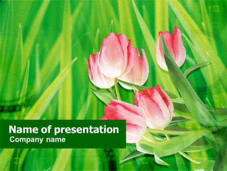 Light Pink Colored Tulips PowerPoint Template
