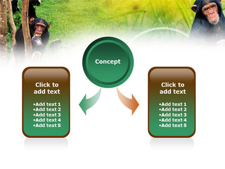Apes PowerPoint Template, Slide 4, 01140, Animals and Pets — PoweredTemplate.com