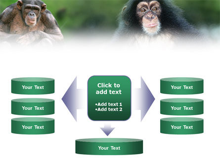 Baby Ape PowerPoint Template Slide 13
