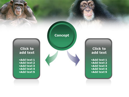 Baby Ape PowerPoint Template Slide 4