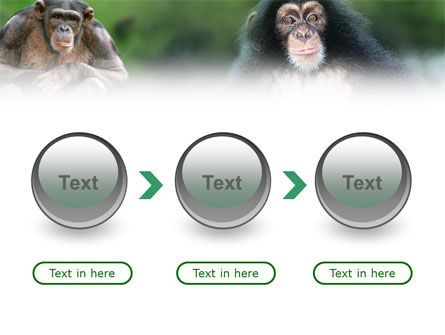 Baby Ape PowerPoint Template Slide 5