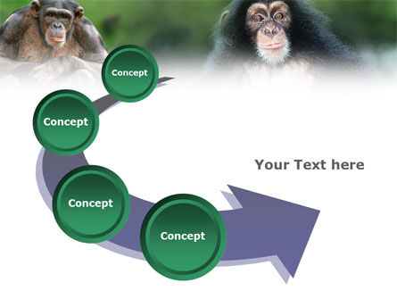 Baby Ape PowerPoint Template Slide 6