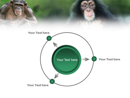 Baby Ape PowerPoint Template Slide 7