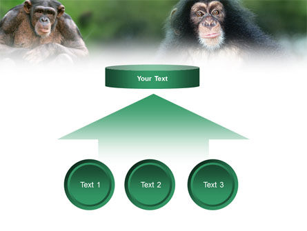 Baby Ape PowerPoint Template Slide 8