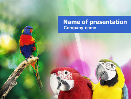 Parrot PowerPoint Template, 01150, Nature & Environment — PoweredTemplate.com