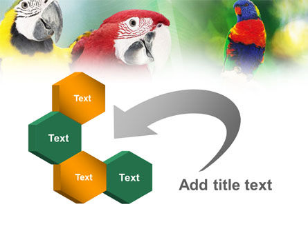 Parrot PowerPoint Template Slide 11