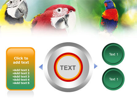 Parrot PowerPoint Template Slide 12