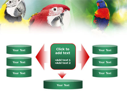 Parrot PowerPoint Template Slide 13