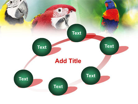Parrot PowerPoint Template Slide 14