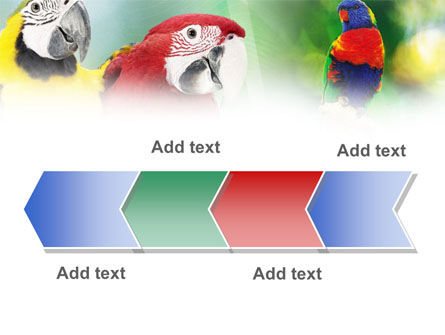 Parrot PowerPoint Template Slide 16