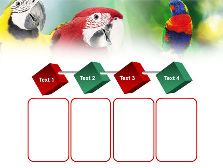 Parrot PowerPoint Template Slide 18