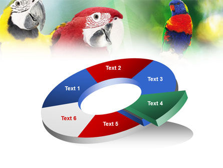 Parrot PowerPoint Template Slide 19