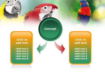 Parrot PowerPoint Template, Slide 4, 01150, Nature & Environment — PoweredTemplate.com