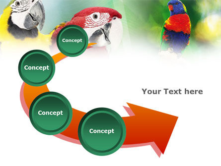 Parrot PowerPoint Template Slide 6