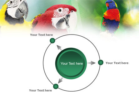 Parrot PowerPoint Template Slide 7