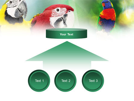 Parrot PowerPoint Template Slide 8