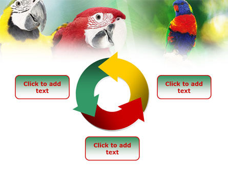 Parrot PowerPoint Template Slide 9