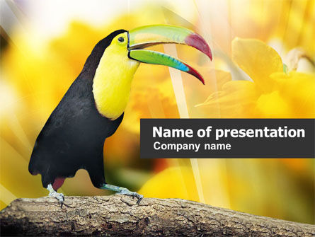 Animals and Pets: Modèle PowerPoint de toucan #01151