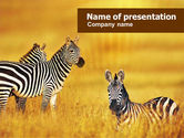 Animals and Pets: Zebra In Yellow Savannah PowerPoint Template #01165
