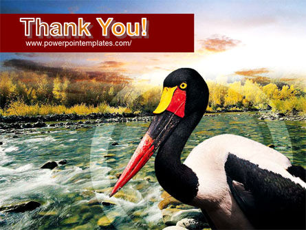 Saddle-billed Stork Free PowerPoint Template Slide 20