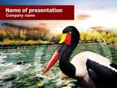 Animals and Pets: Saddle-billed Stork Free PowerPoint Template #01176