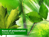 Nature & Environment: Bladeren PowerPoint Template #01188
