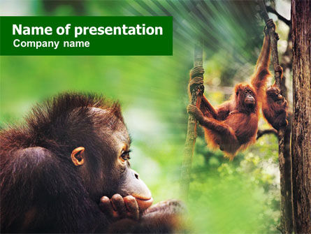 Animals and Pets: Orangoetan PowerPoint Template #01203