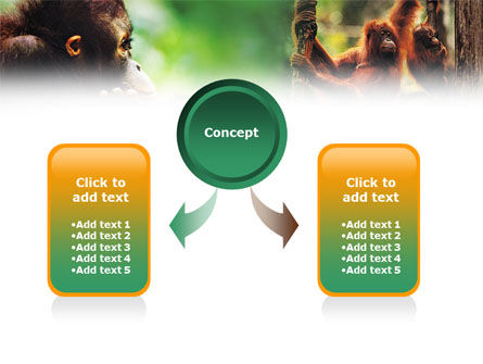 Orangutan PowerPoint Template, Slide 4, 01203, Animals and Pets — PoweredTemplate.com