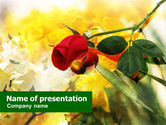 Holiday/Special Occasion: Red Rose PowerPoint Template #01218