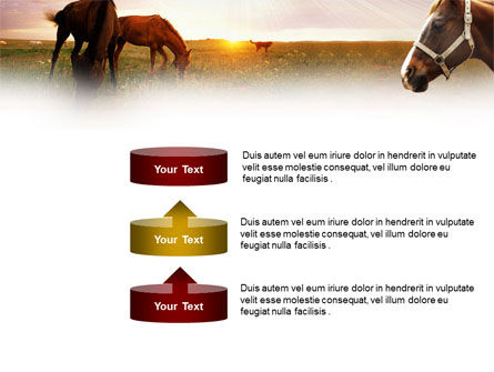 Horses PowerPoint Template Slide 10