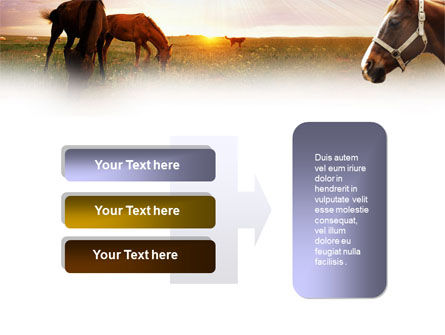 Horses PowerPoint Template Slide 11