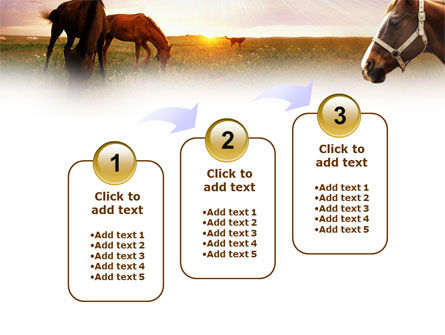 Horses PowerPoint Template Slide 14