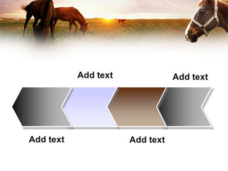 Horses PowerPoint Template Slide 16