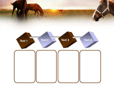 Horses PowerPoint Template Slide 18