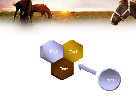 Horses PowerPoint Template Slide 19