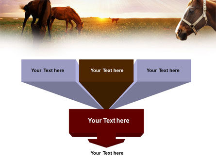 Horses PowerPoint Template, Slide 3, 01228, Agriculture — PoweredTemplate.com