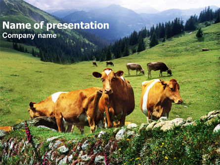 Agriculture: Cows on the Meadow PowerPoint Template #01314