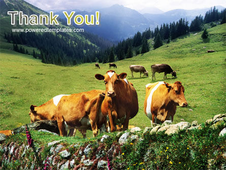 Cows on the Meadow PowerPoint Template Slide 20